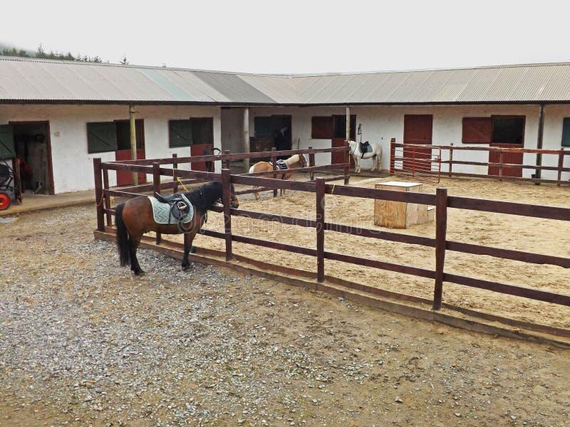 Лошади и пони конюшен стоковые изображения rf