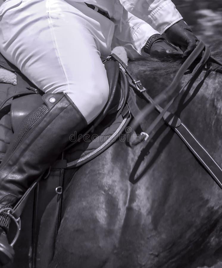 Лошади кожаной седловины всадника лошади вися резвятся стоковые изображения rf