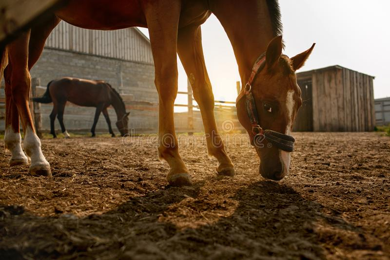 2 лошади на зоре стоковое фото