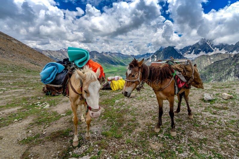 Лошади нося располагаясь лагерем оборудование в красивых горном виде и государстве Кашмира, Индии стоковое изображение rf
