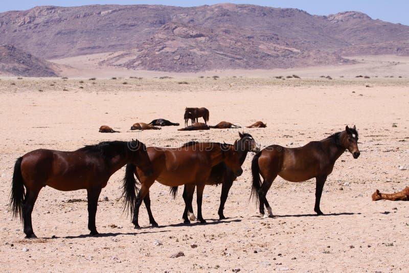 лошади одичалые стоковое изображение rf
