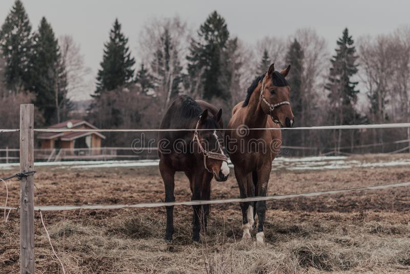 Лошади осенней сельской местности стоковое изображение