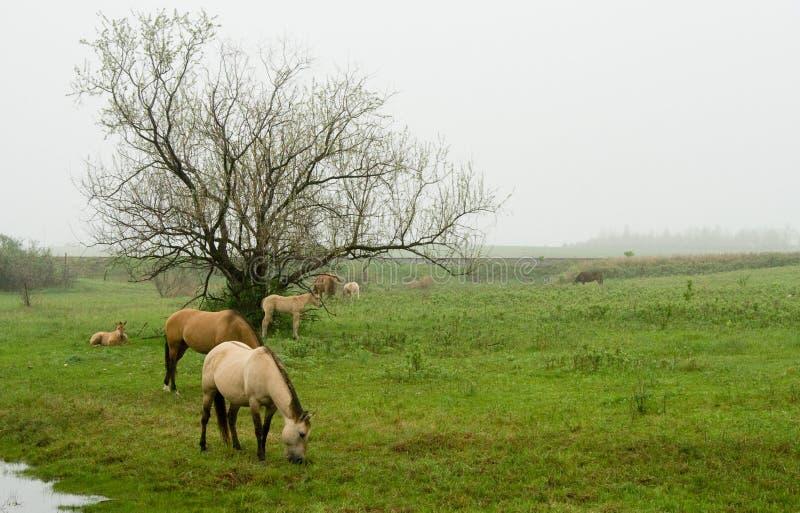 Лошади пася в поле стоковая фотография