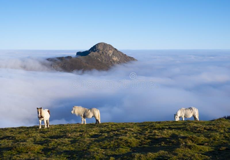 Лошади пася в природном парке Aiako Harriak с морем облаков на заднем плане стоковое фото rf