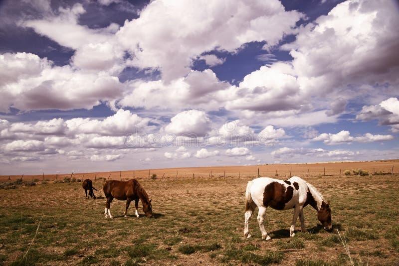 Лошади пася в югозападном Колорадо стоковое изображение