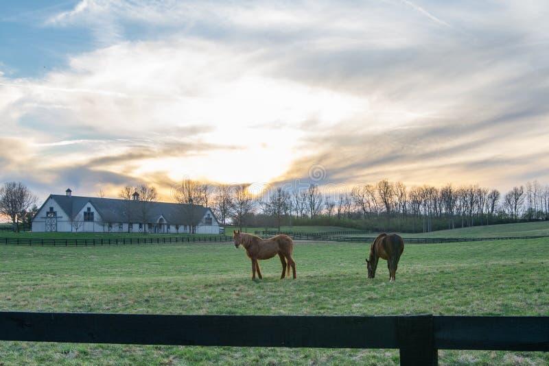 Лошади пася снаружи Nicholasville, Кентукки стоковые изображения