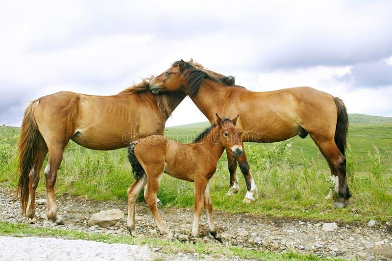 лошади семьи стоковая фотография rf