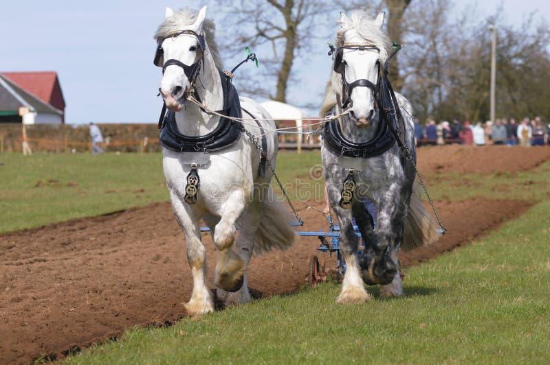 лошади сопрягают паша графство стоковые изображения