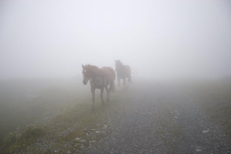 лошади тумана стоковые фотографии rf