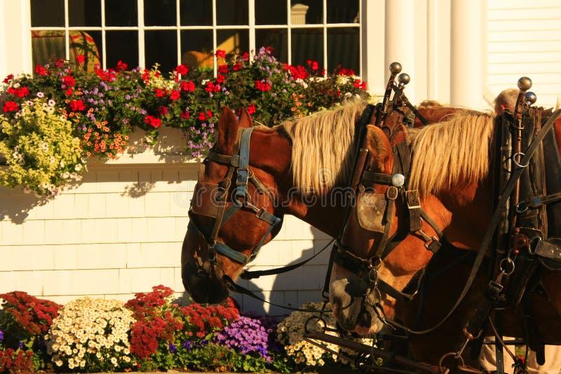 лошади экипажа стоковое изображение rf