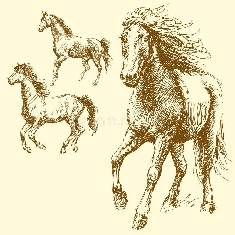 лошади иллюстрация штока