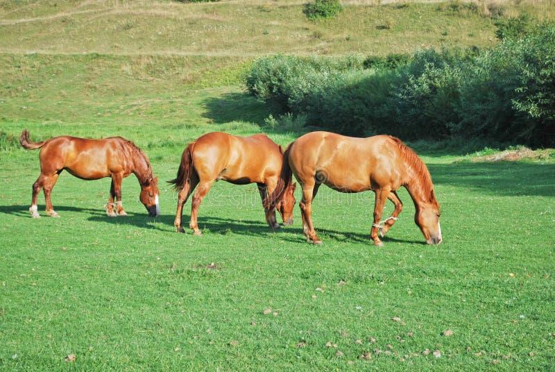 лошади 3 стоковые фото