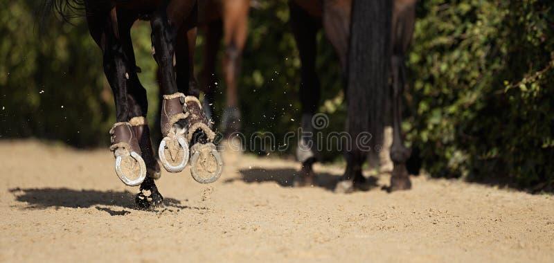 Лошадь бежит на песочной дороге стоковые изображения rf