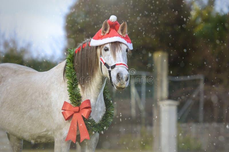 Лошадь белого рождества с Santa& x27; шляпа s стоковое изображение