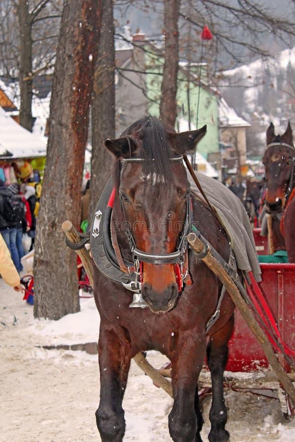 Лошадь Брауна на улице Krupowki в Zakopane в зиме стоковые фото