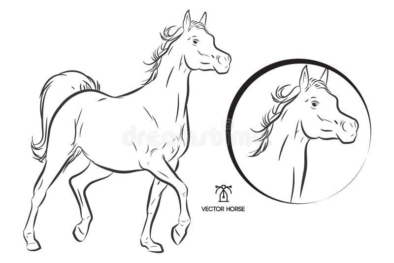 Лошадь вектора плана аравийская иллюстрация вектора