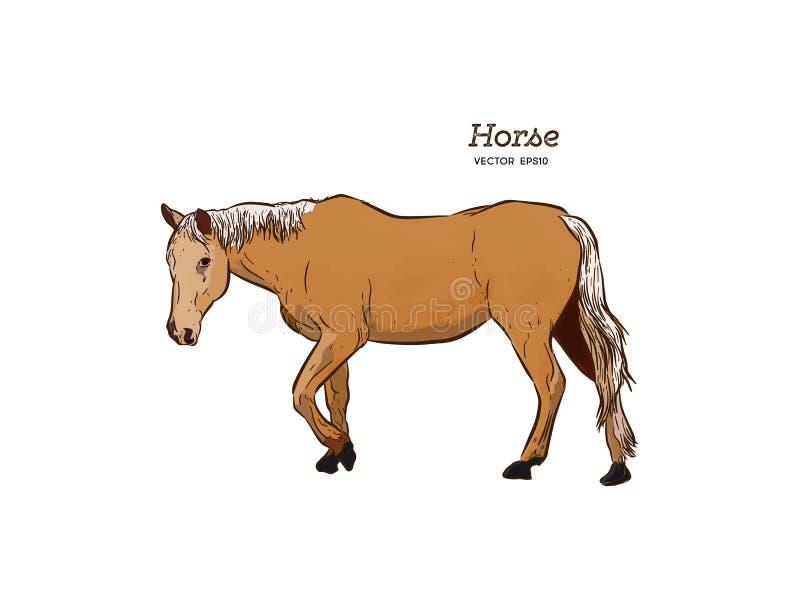 Лошадь, вектор эскиза притяжки руки бесплатная иллюстрация