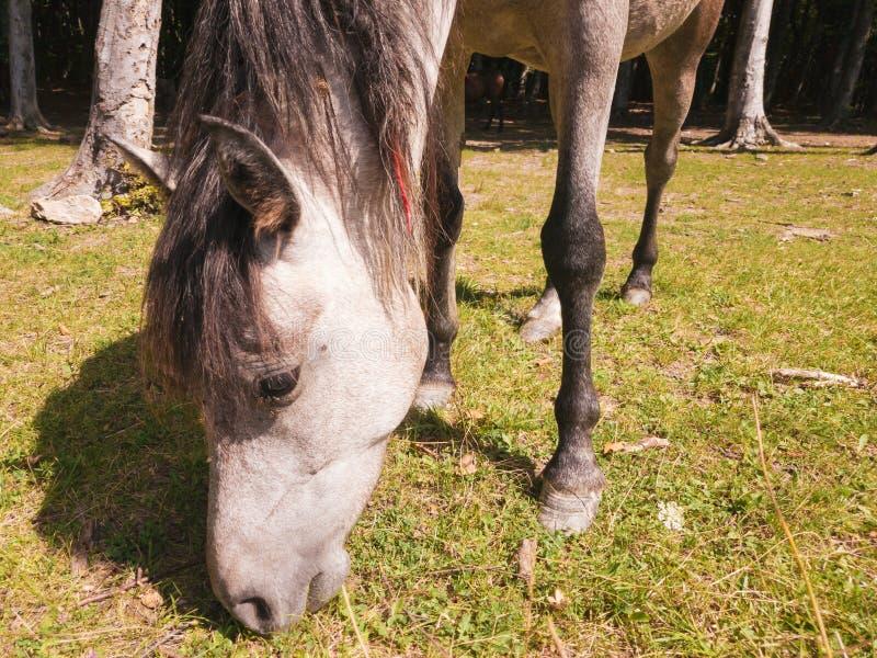 Лошадь внутри леса стоковые изображения rf