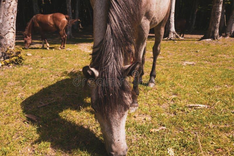 Лошадь внутри леса стоковое фото rf