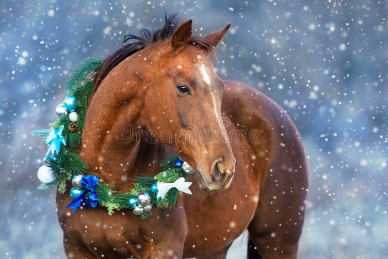 Лошадь в венке рождества стоковое изображение rf
