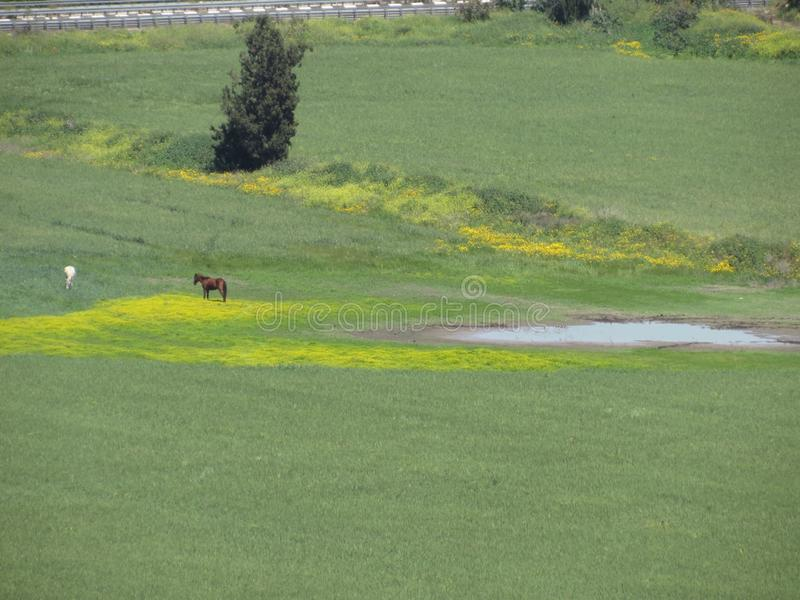 Лошадь в зеленом желтом цвете стоковое изображение
