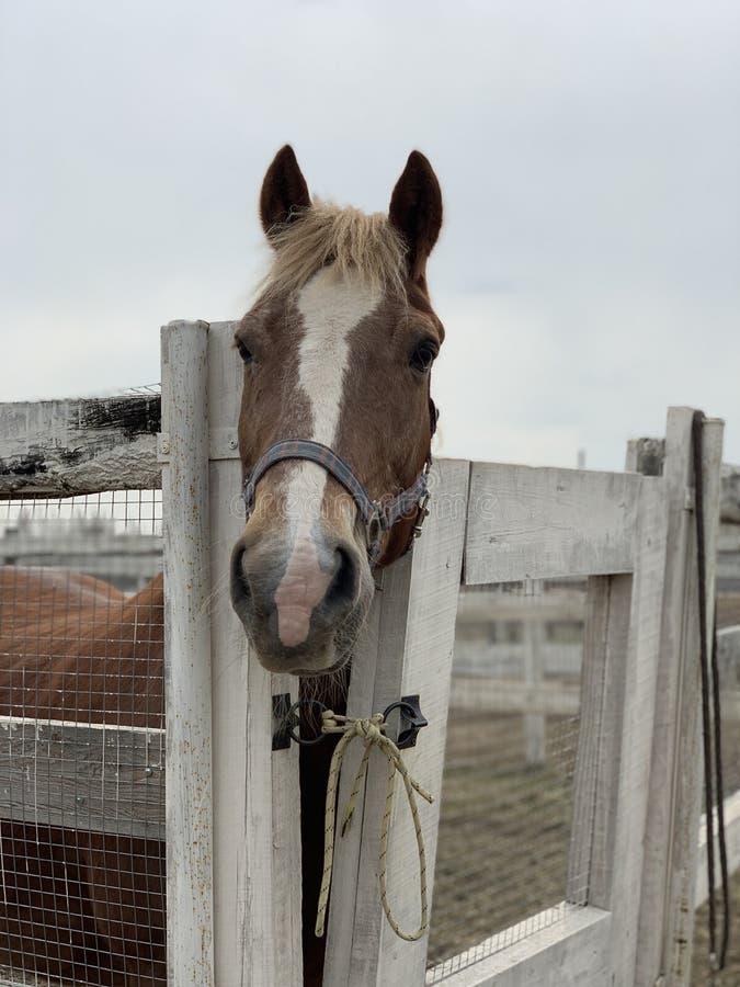 Лошадь в конюшне стоковое фото