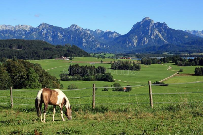 Лошадь в красивейшей баварской сельской местности стоковое изображение