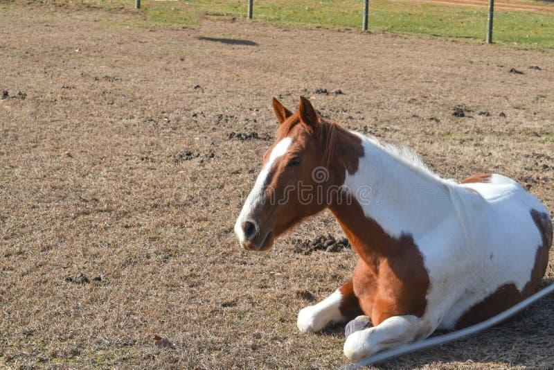 Лошадь в покое стоковая фотография