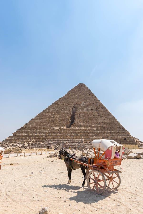 Лошадь в проводке около пирамиды Menkaure стоковые изображения rf