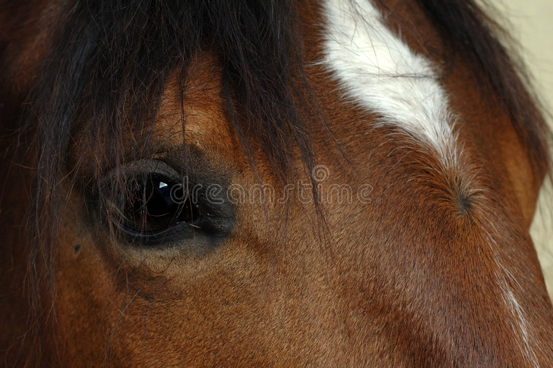 лошадь глаза коричневого цвета близкая вверх стоковые изображения rf