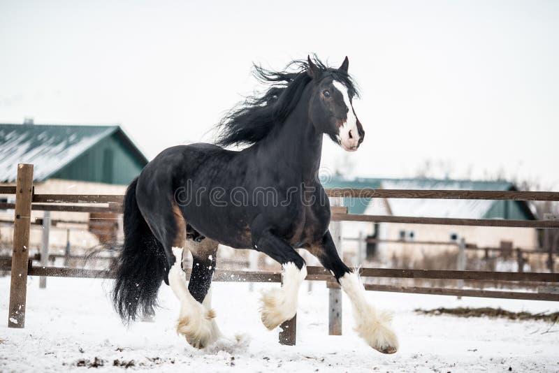Лошадь графства стоковая фотография rf