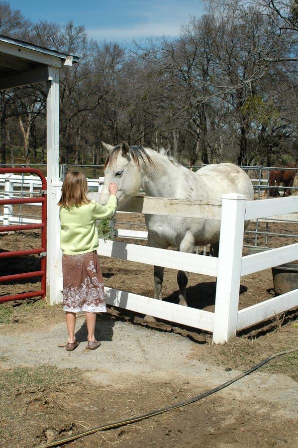 лошадь девушки стоковые изображения rf