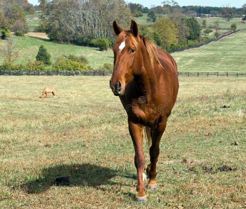 лошадь довольно стоковое изображение rf