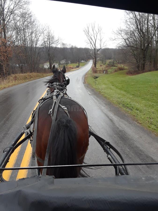 Лошадь и багги Амишей на проселочной дороге стоковая фотография rf