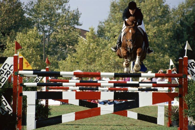 Лошадь и всадник стоковые фотографии rf