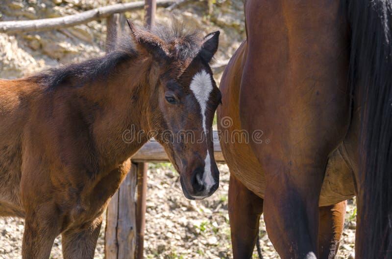 Лошадь и новичок в ферме в Лигурии стоковые фотографии rf