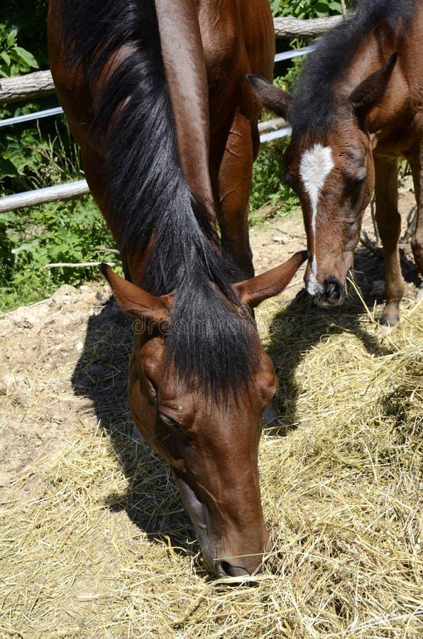 Лошадь и новичок в ферме в Лигурии стоковое изображение rf