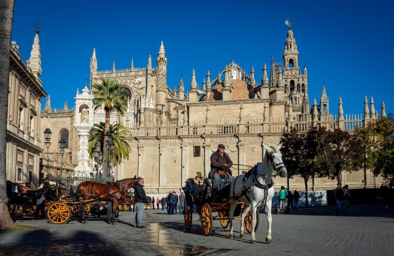 Лошадь и тренер перед собором Севильи стоковая фотография