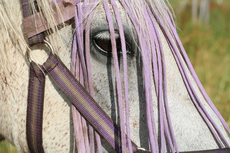 лошадь картежника стоковые изображения