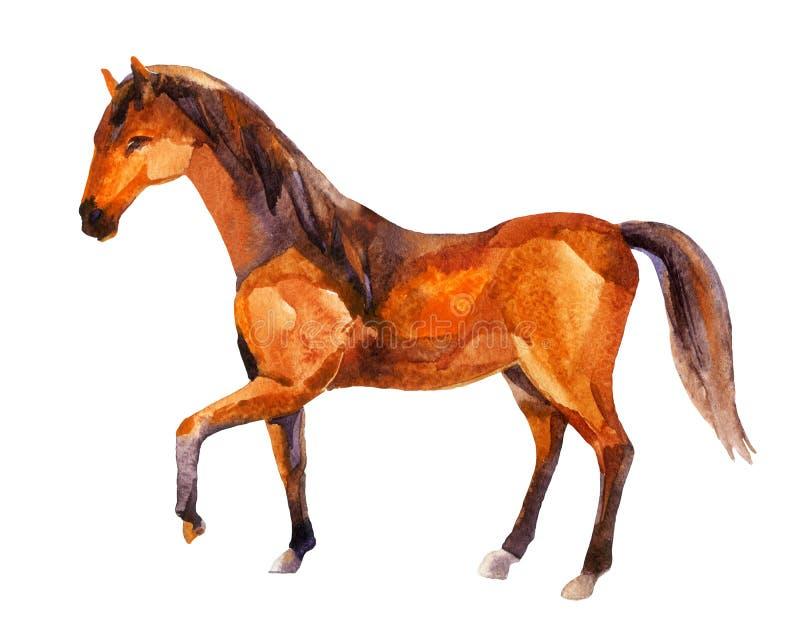 Лошадь, картина акварели иллюстрация вектора