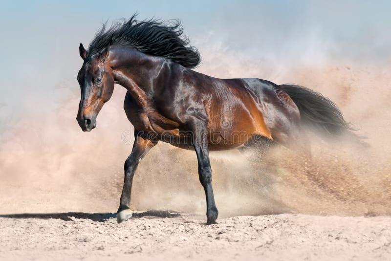Лошадь, который побежали в пыли стоковое изображение rf