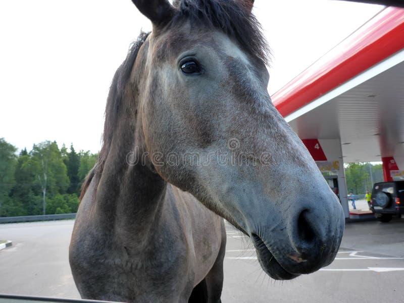 Лошадь на бензоколонке стоковые изображения