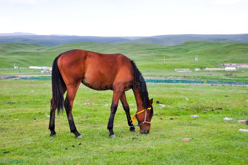 Лошадь на выгоне стоковое фото rf