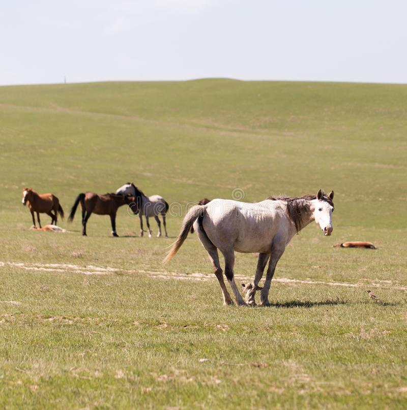 Лошадь на природе стоковое фото rf