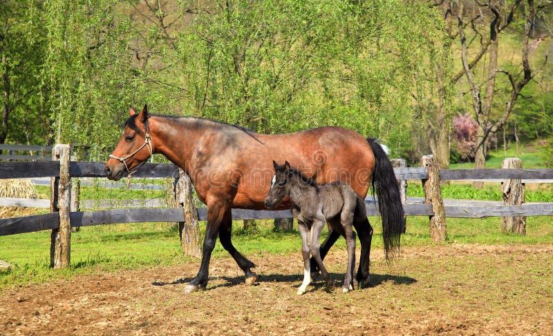 лошадь новичка стоковое изображение