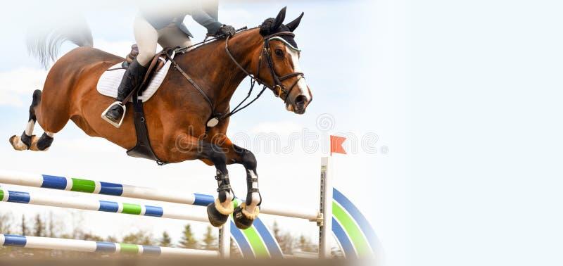 Лошадь освобождает скачку во время события шоу скача стоковое изображение rf