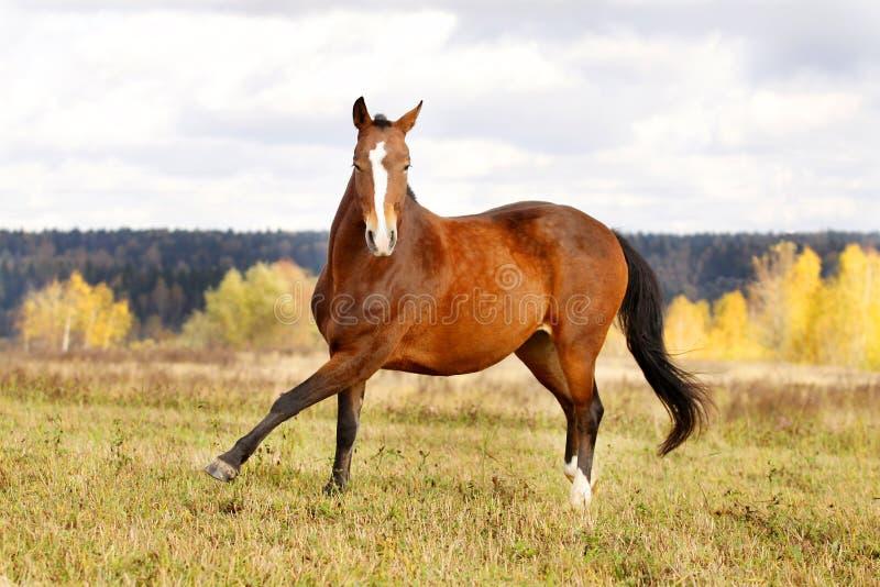 лошадь осени стоковая фотография