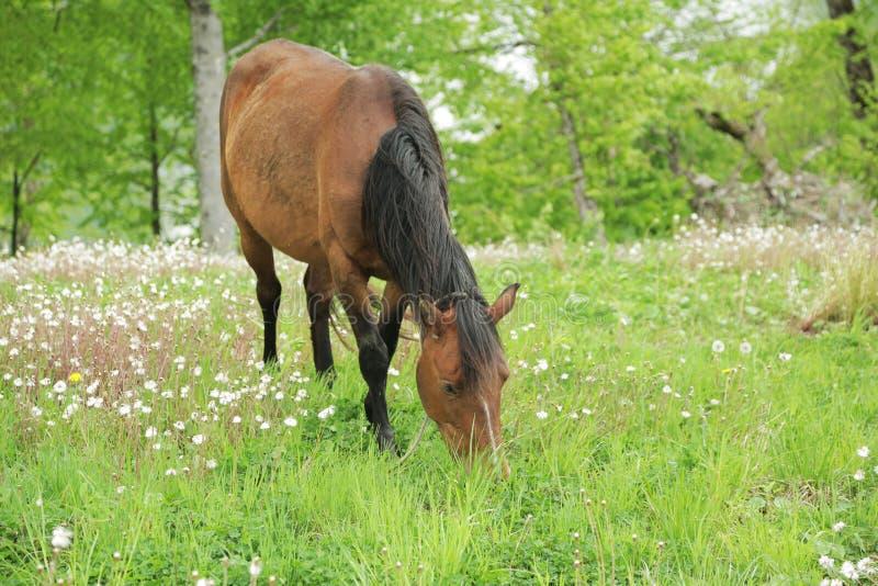 Лошадь пася в поле 006 стоковые фото