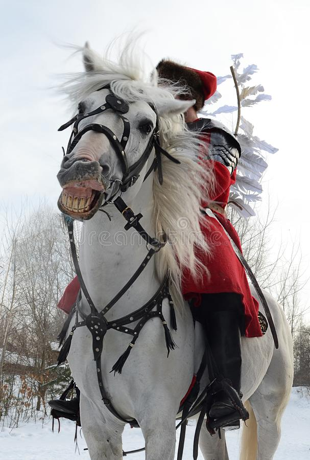 Лошадь потехи сумасшедшая белая в проверке на которой всадник сидит в красном jetnokostjume стоит между сельской местностью зимы стоковое фото