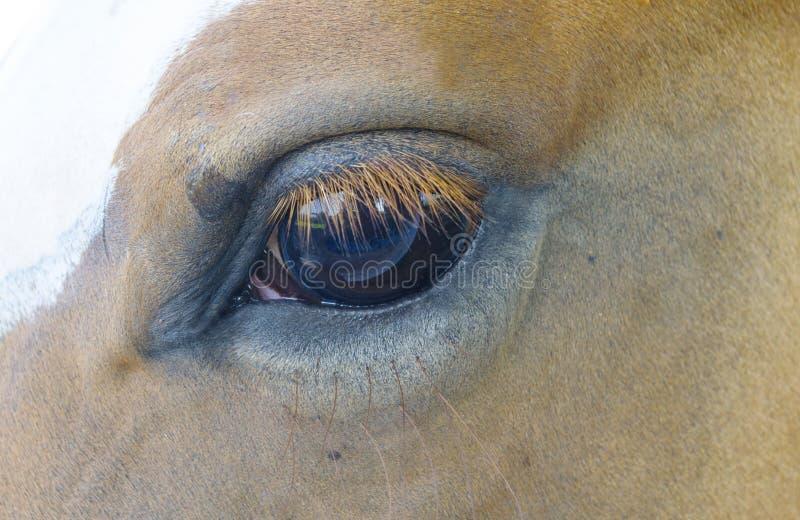 Лошадь при мухы tormenting он стоковая фотография